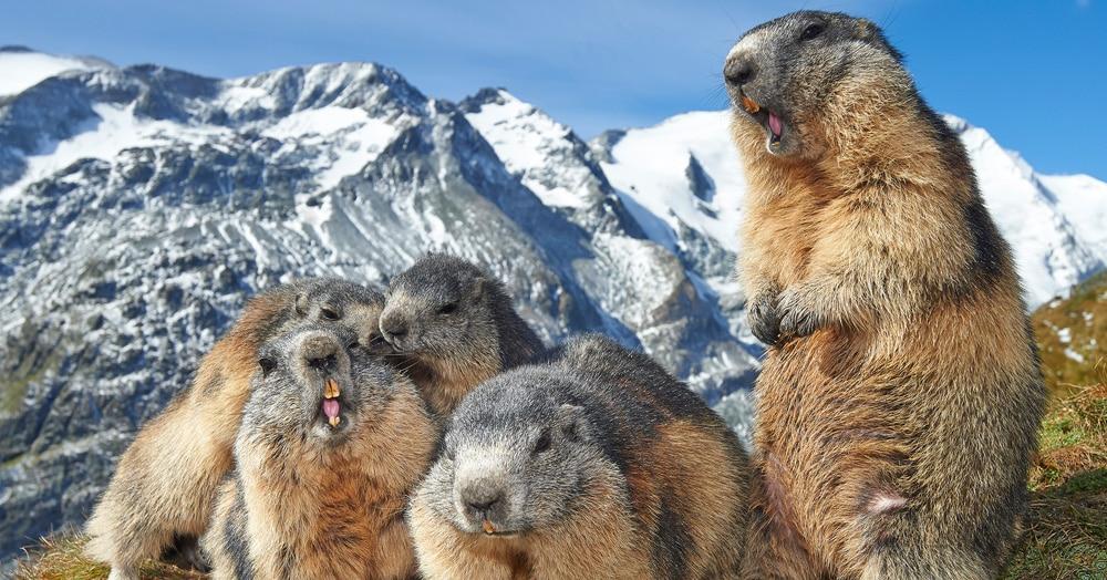 25 фотографий, которые стали лучшими снимками дикой природы в 2019 году