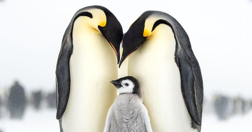 Конкурс на лучшего птичьего фотографа объявил победителя и показал лучшие работы участников
