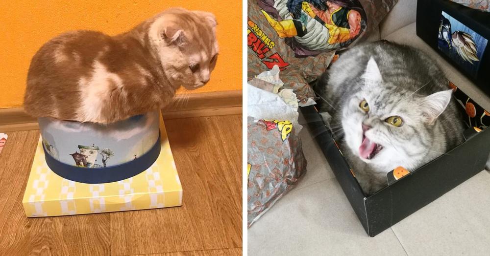 30 забавных фотодоказательств того, что коты просто созданы для коробок. А коробки — для котов