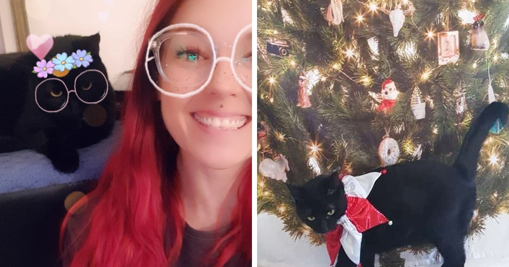 Девушка придумала способ поставить «ёлку» в доме, где живут кошки. Только их это не остановило