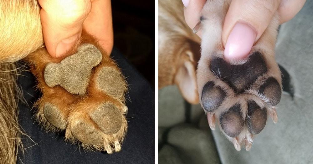 Пользователи Твиттера разглядели коал на собачьих лапках, и развидеть это теперь невозможно