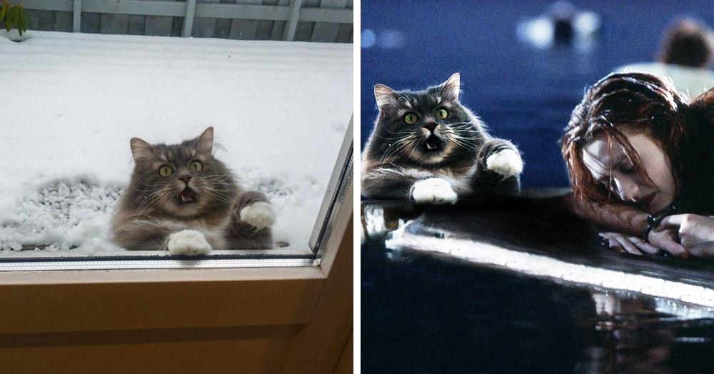 Орущий кот очень хотел попасть домой, но попал в фотошоп-битву. И там его драму вывели на максимум