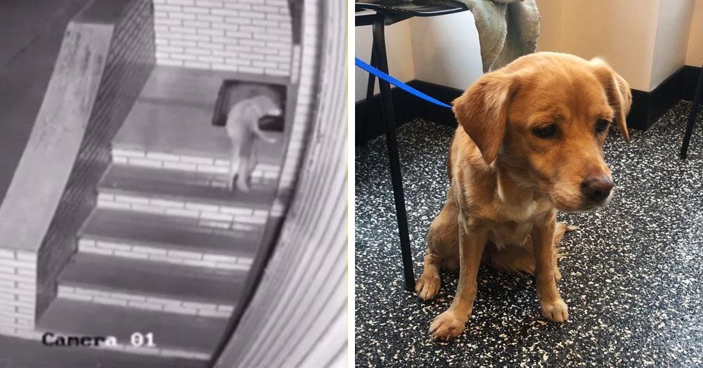 Американец нашёл дома собаку, хотя дверь и окна были закрыты. Он и загадку решил, и собаку приютил