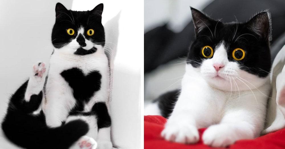 Кошки из Нидерландов покоряют всех своим безумным взглядом, а каждый их снимок достоин стать мемом