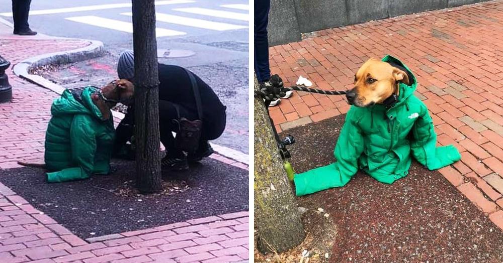 Девушка надела на пса свою куртку, чтобы он не замёрз — и превратила его в главного модника на районе
