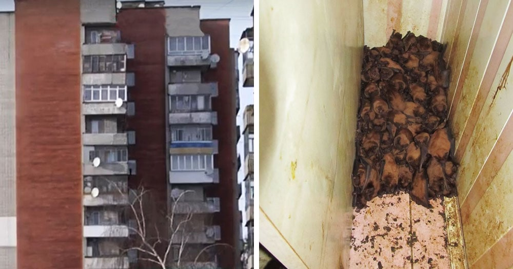 Жители Львова обнаружили на своём балконе 1700 летучих мышей, которые прилетели туда зимовать и размножаться