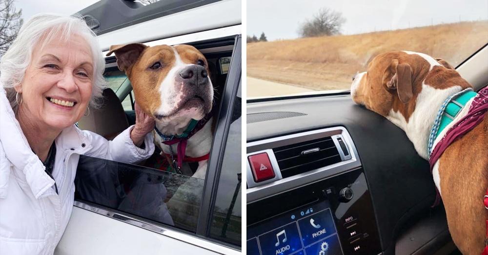 Пса украли, и он нашёлся — но так далеко от дома, что для его возвращения провернули целую операцию