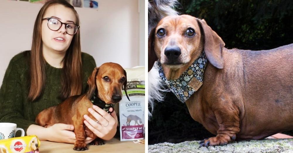Хозяйка увидела фото пса и поняла, что ему нужна помощь. Ведь его любовь к вкусняшкам стало видно издалека