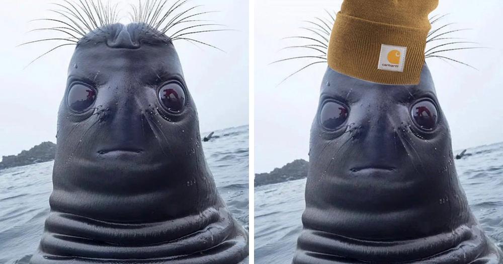 В сети завирусился снимок перевёрнутого тюленя. Он похож на НЛО, и люди с радостью дорисовывают ему новые образы