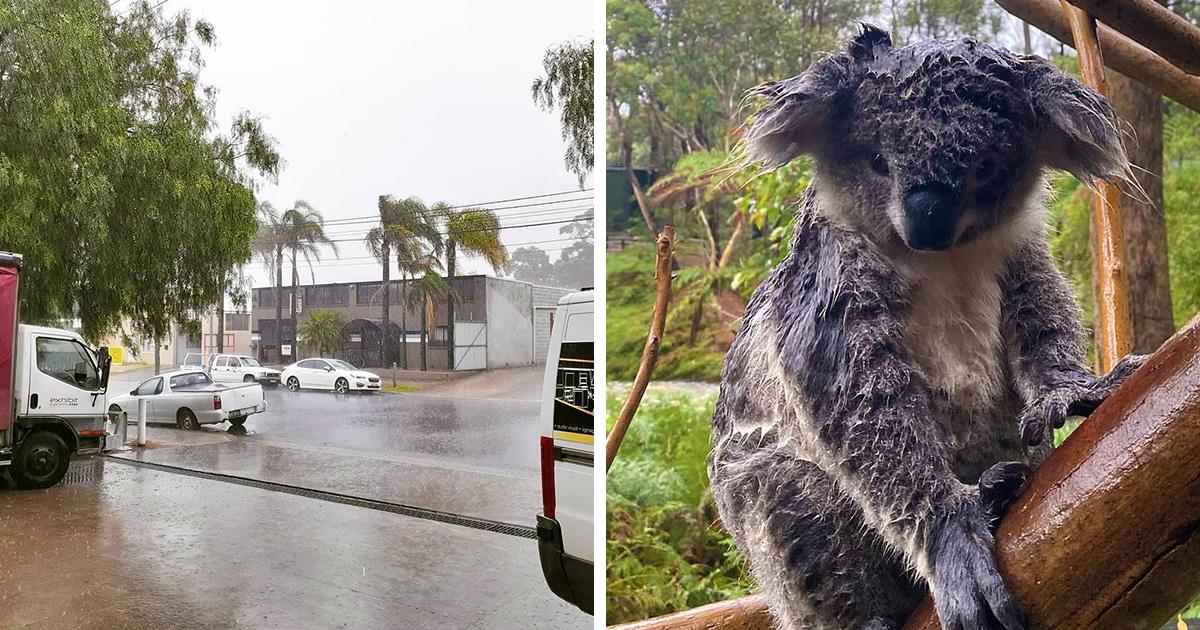В Австралии наконец-то пошёл дождь! Он затушил около 30 смертоносных пожаров