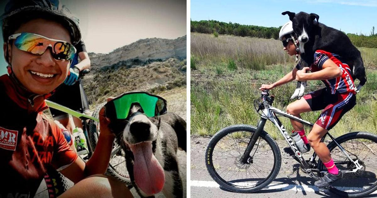 В Аргентине велосипедисты подобрали на обочине обезвоженную собаку и показали, что такое добро и взаимовыручка