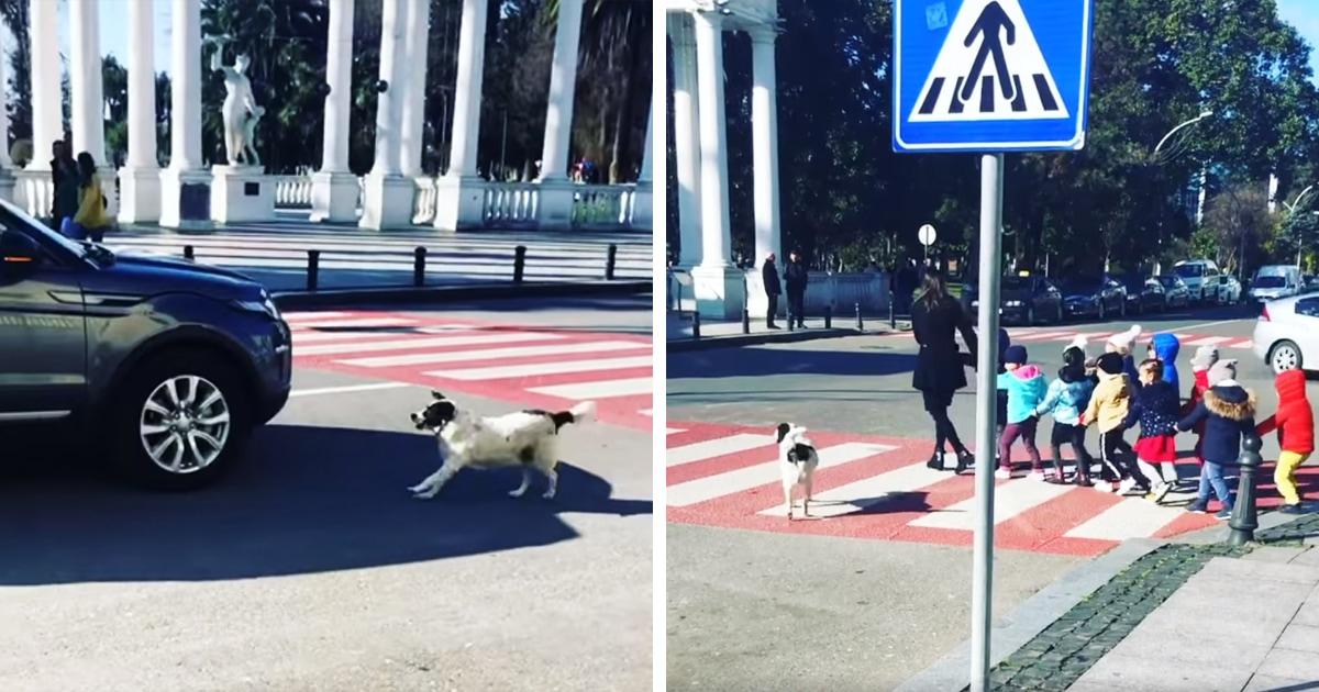 Бездомный пёс из Грузии помогает детям переходить дорогу — и знает правила движения получше некоторых людей
