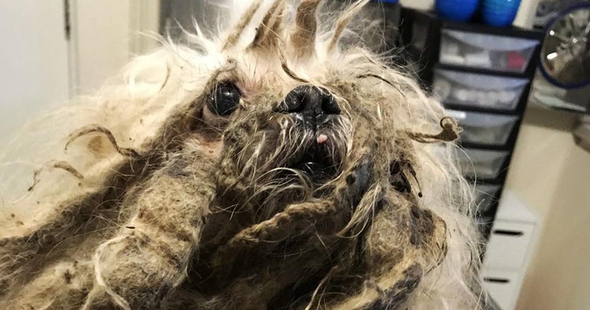 Прохожие нашли на улице комок шерсти, который оказался заросшим псом. Но стрижка вернула ему милашность