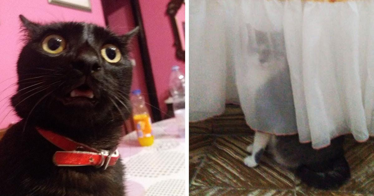 Хозяева делятся странными вещами, которые делают их кошки. И эти пушистые знают, как насмешить своего человека