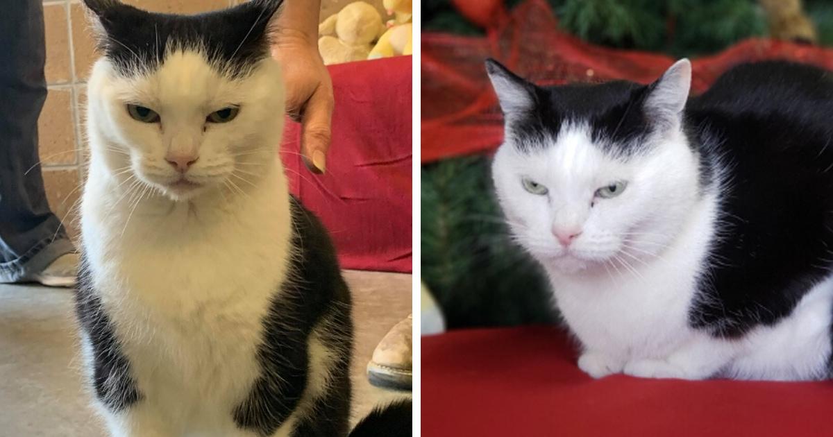 «Худшая кошка в мире»: приют ищет дом вредной кошке по кличке Пердита, и для этого ей написали честное резюме