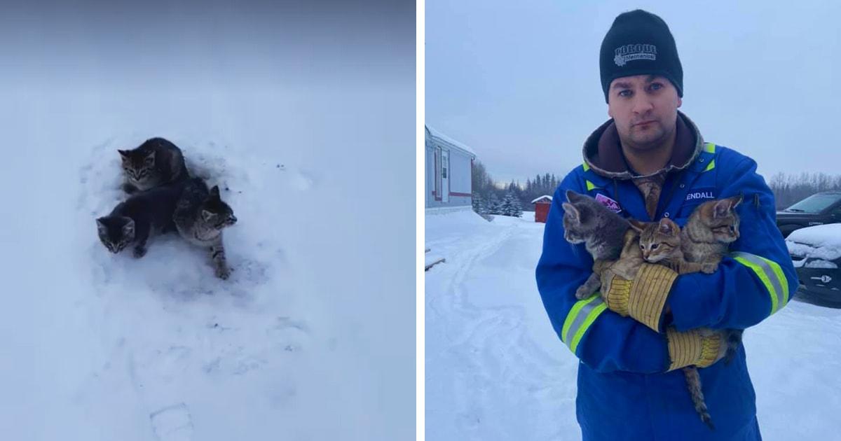 Мужчина спас трёх котят, которые примёрзли к дороге. В этом ему помогло то, что оказалось под рукой — кофе