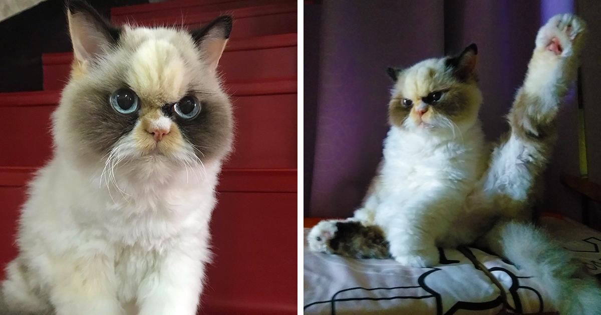 Природа наградила кошечку Мяу-Мяу особой пушистостью и мордахой жуткой злюки. Её фотки — триумф котопрезрения!
