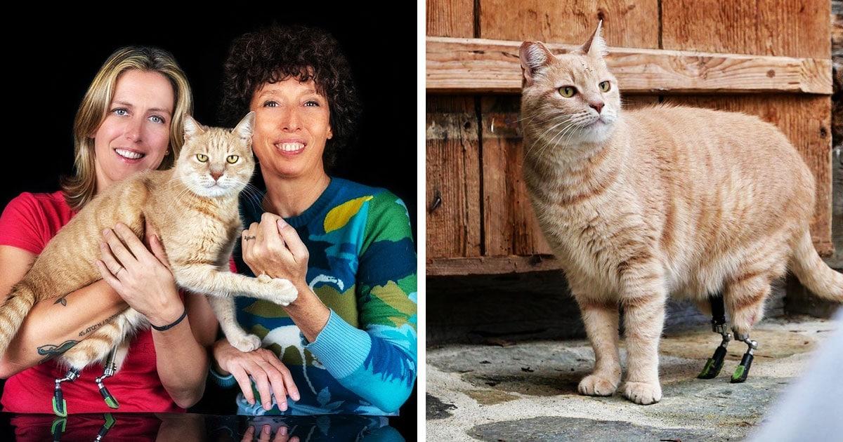 Кот попал в аварию, потерял лапы, и ему поставили бионические протезы. И его энергичности можно позавидовать!