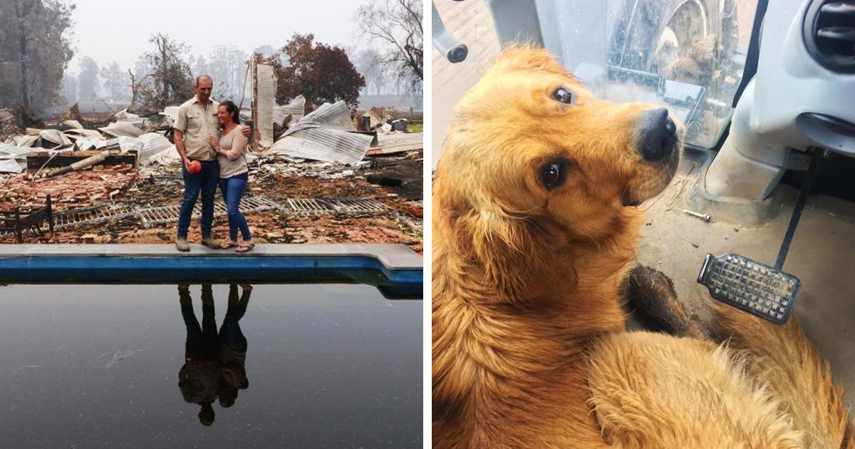 Австралийская семья думала, что пожар уничтожил всё у них дома, но нет — огонь оставил подарок их собаке