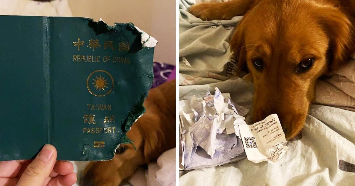 Собака сгрызла паспорт своей хозяйки, но она этому только рада. Ведь девушка считает, что питомица спасла её