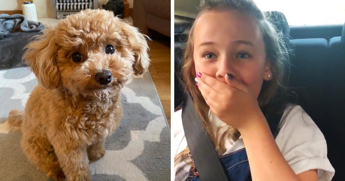 Девочка думала, что везёт щенка друзьям, но это был подарок для неё. И узнав об этом, она не сдержала эмоций
