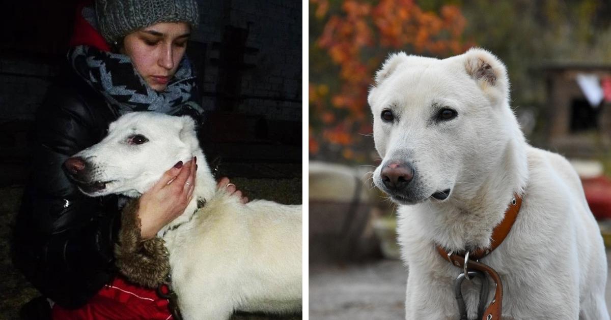 Женщина узнала, что бывший бросил их пса, но она жила за 2000 км. И неравнодушные помогли им воссоединиться!