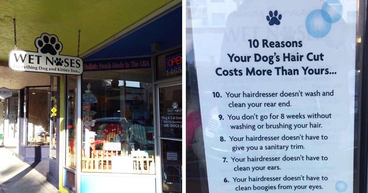 Салон в 10 пунктах объяснил, почему стрижка собаки дороже человеческой — этому есть веские, но мерзкие причины