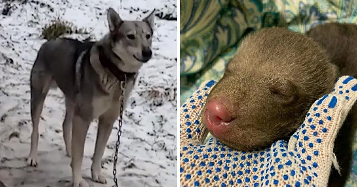 В садоводстве под Гатчиной собака принесла себе детёныша. Только вот он оказался опасным зверем