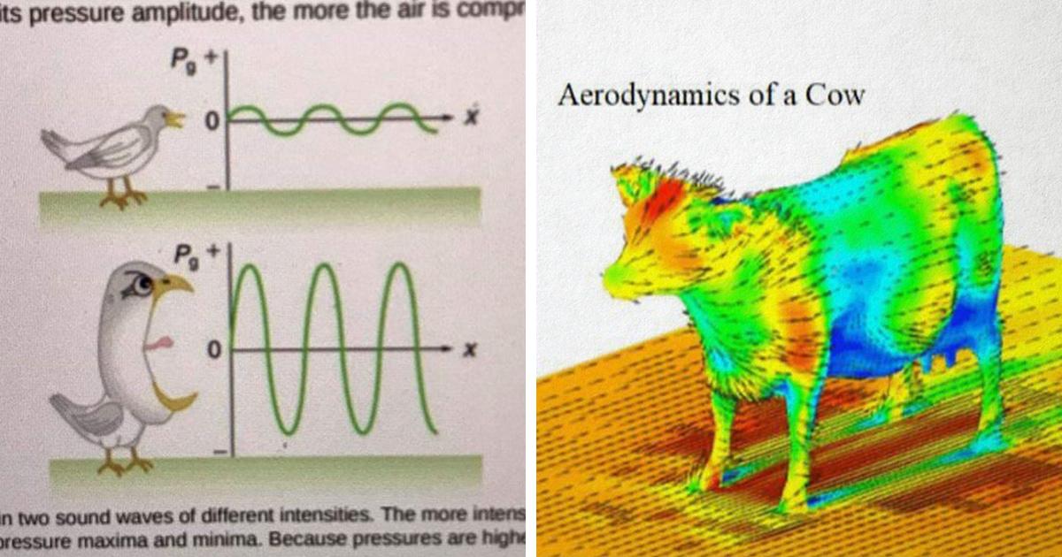 В сети делятся странными иллюстрациями из реальных учебников. Все они выглядят как упоротые мемы