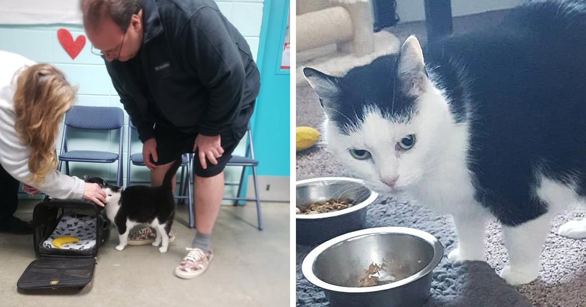 Была Пердита, стала Ноэль: зоозащитники нашли дом для «худшей кошки в мире». Добрее она от этого не стала