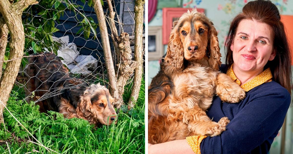 У «худшей кошки в мире» появился конкурент по вредности. Это пёс Хьюго, и он сбегал из дома более 270 раз