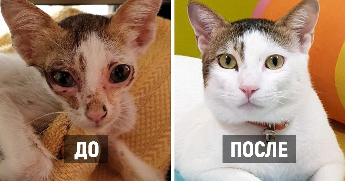 17 фотографий котов, которые преобразились после того, как попали в руки заботливых хозяев