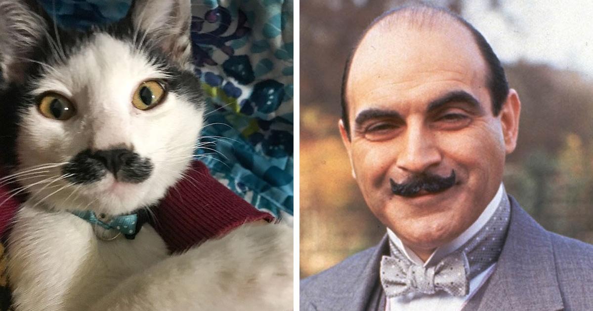 Этого кота зовут Альберто, но больше ему подошло бы «Пуаро». А всё благодаря шикарным джентльменским усам