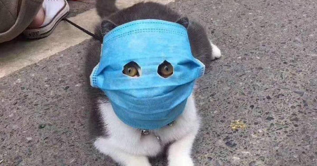 В Китае хозяева надели на своего кота маску — и этот борец с вирусами тут же стал героем работ фотошоперов