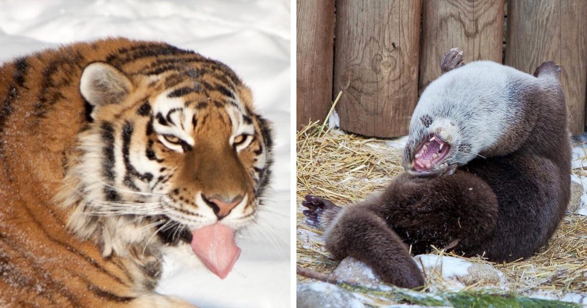 Челябинский зоопарк поделился «удачными» фото своих животных, которые точно не попадут на страницы учебников