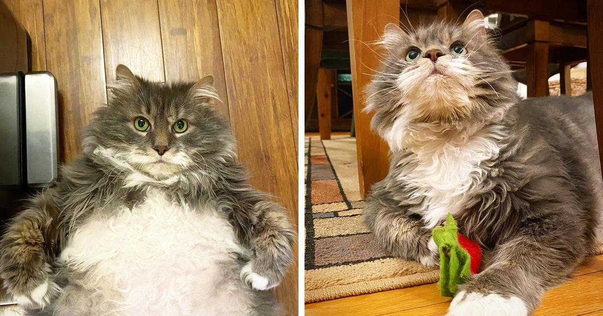 Толстячок Уилфорд весит как три кота, а его пузико очаровательно, как и он сам — и люди от него в восторге!