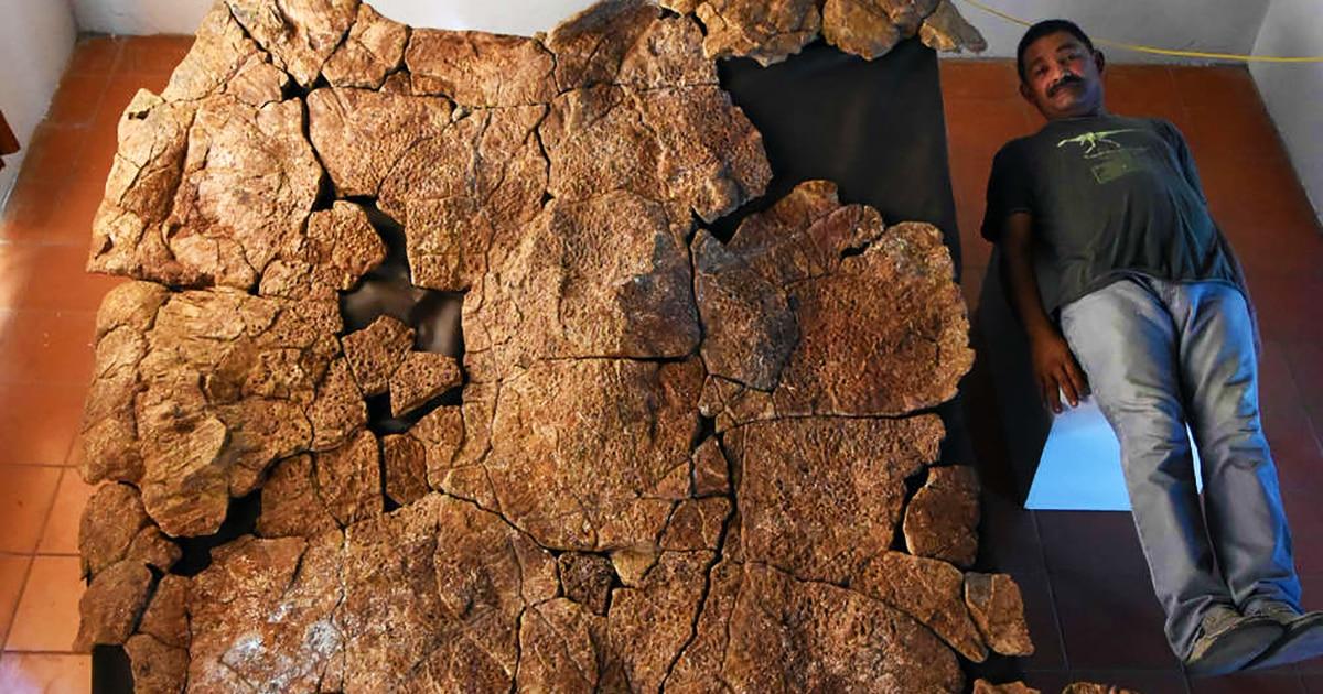 В Южной Америке нашли останки огромной черепахи, чей размер поражает воображение. Её возраст около 13 млн лет
