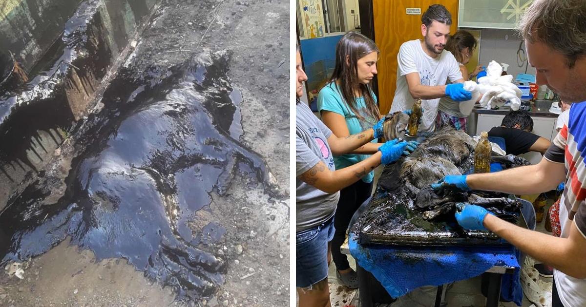 Дети нашли на пустыре чёрное нечто, которое оказалось собакой — её спасли и отмыли, превратив в красотку