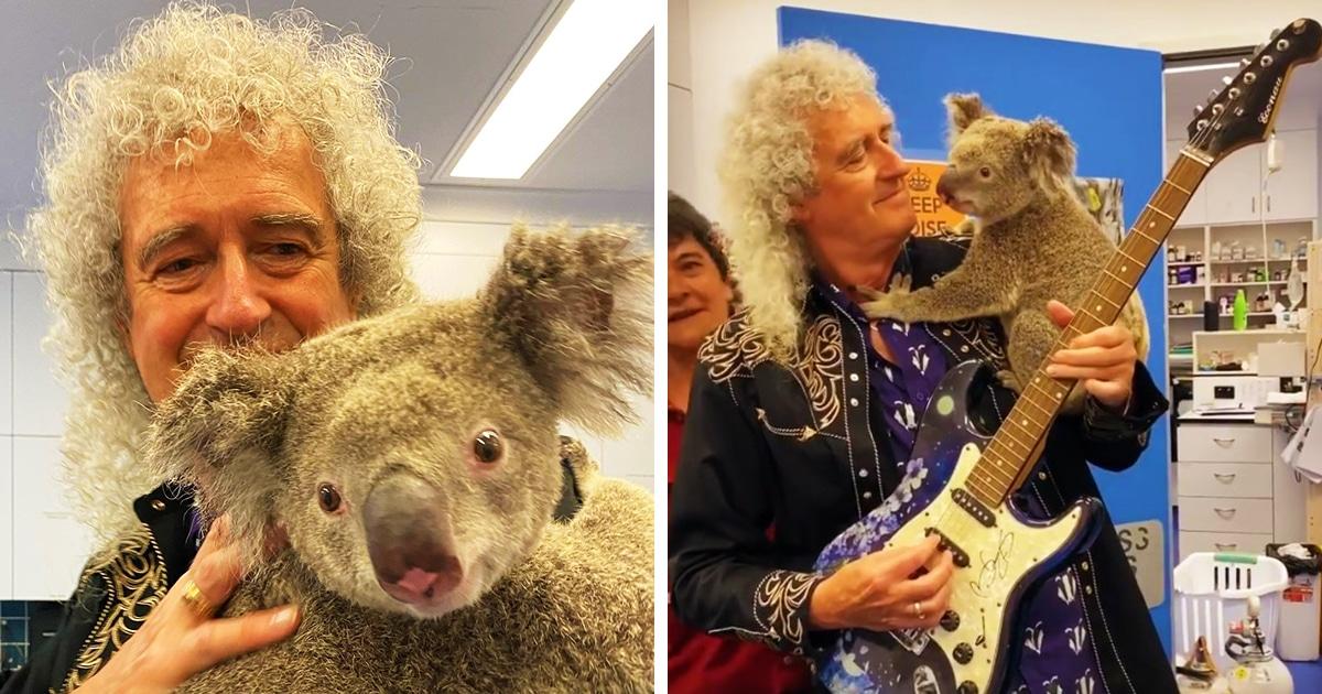 Гитарист Queen Брайан Мэй сыграл для спасённых от пожара коал в Австралии. И это — лишь часть большого дела