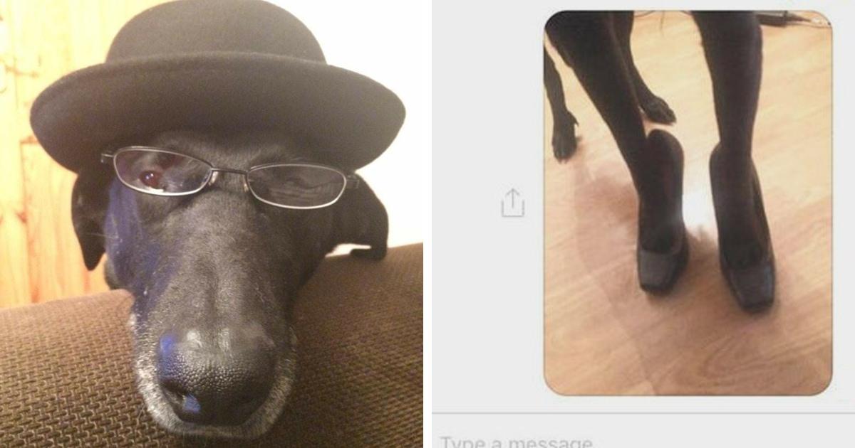 Женщина нашла способ противостоять странным покупателям, которые выпрашивали фото её ног. На помощь пришёл пёс