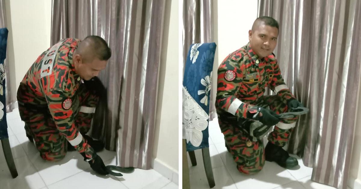 Малазийцы увидели дома змею и вызвали спасателей. Но оказалось, что у страха глаза велики