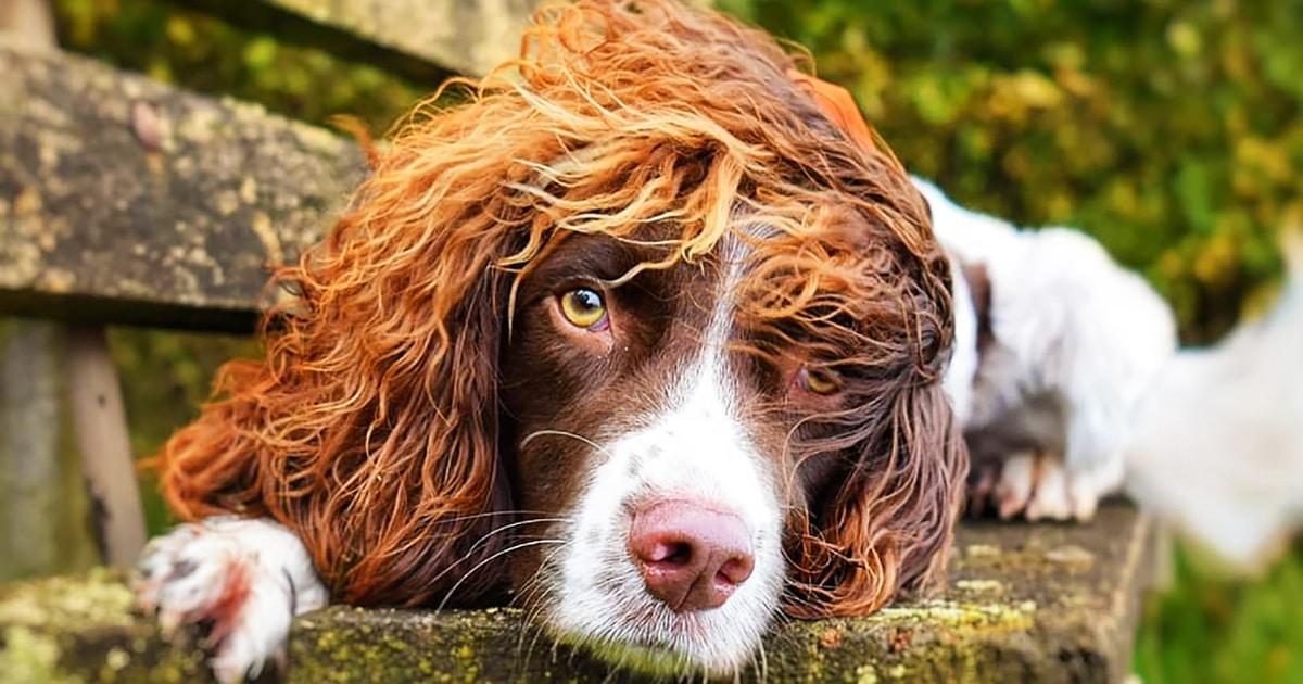Пёс по кличке Финли восхищает людей своей причёской, и ради его фотографий стоило бы издавать собачий Vogue