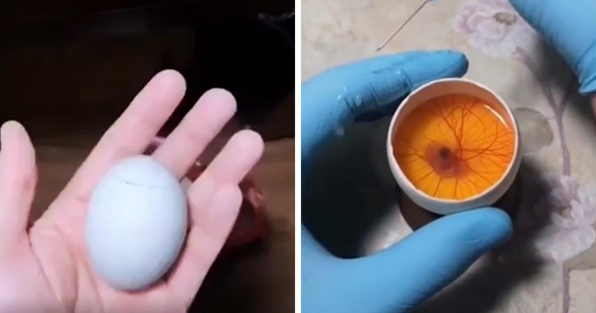 Цыплёнка вырастили в открытом яйце и показали, как он там растёт и развивается. И это эксперимент 100 уровня