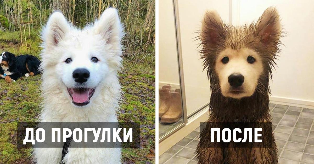 Пользователи сети поделились фото собак, чьи странные выходки никогда не заставят владельцев скучать