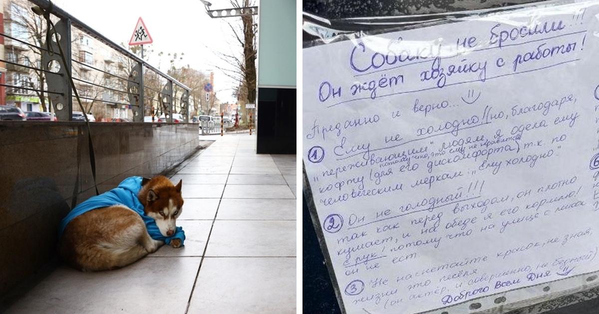 В Калининграде возле ТЦ сидела собака в свитере — прохожие забеспокоились, но появившаяся записка всё объяснила