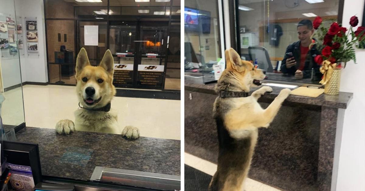 Пёс пришёл в отделение полиции, чтобы сдаться работникам. Он преступник, но его хозяин ещё об этом не знает