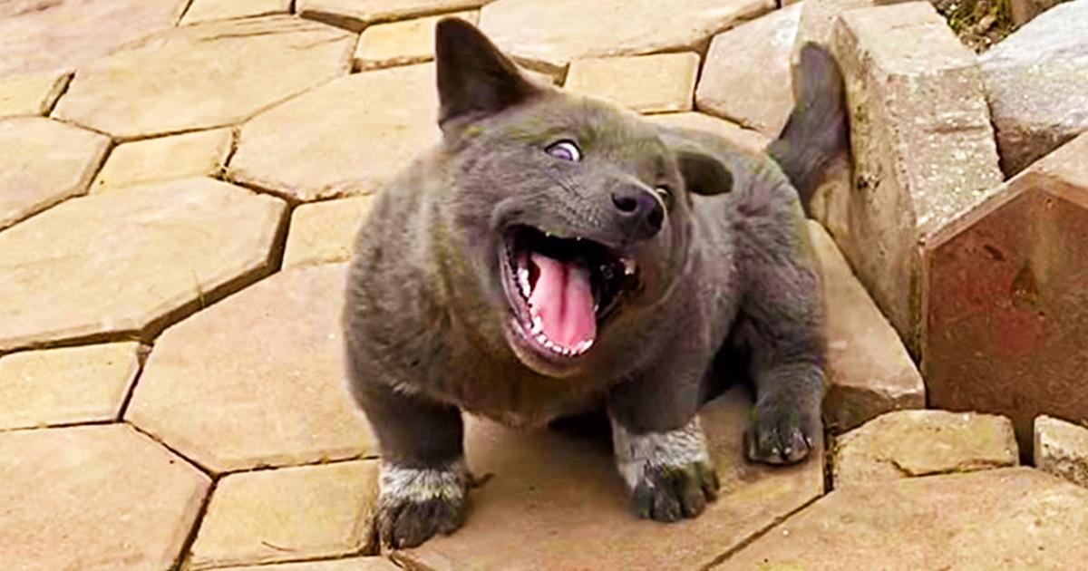 Этот прелестный зверёк покоряет интернет своими фотками, так как непонятно, кто он — кот, пёс или медвежонок