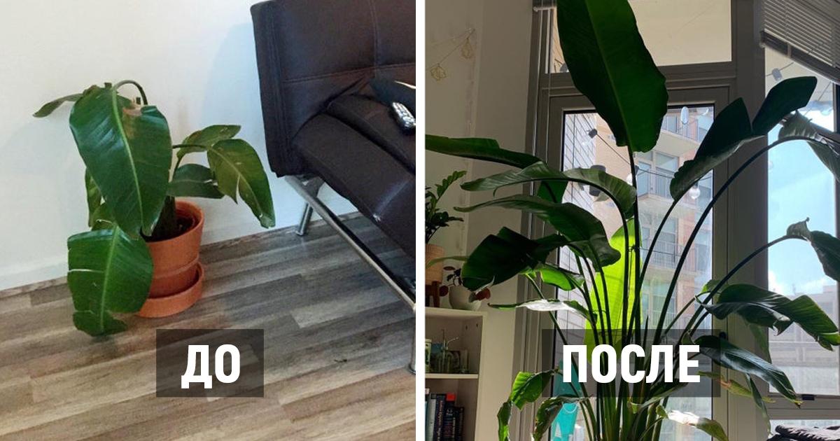 17 примеров того, как растения в руках заботливых людей буквально возвращались из мёртвых