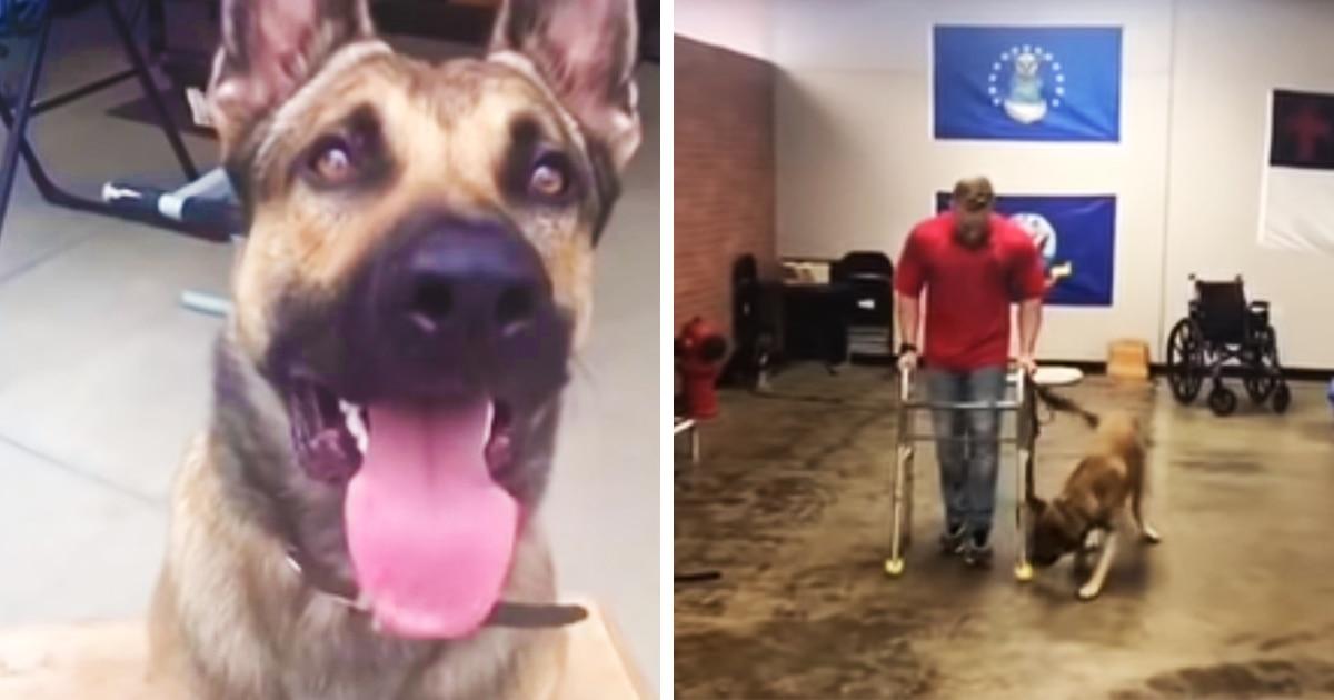 Пёс должен был помогать инвалидам, но провалил все тесты. Он сделал это настолько смешно, что завоевал фанатов