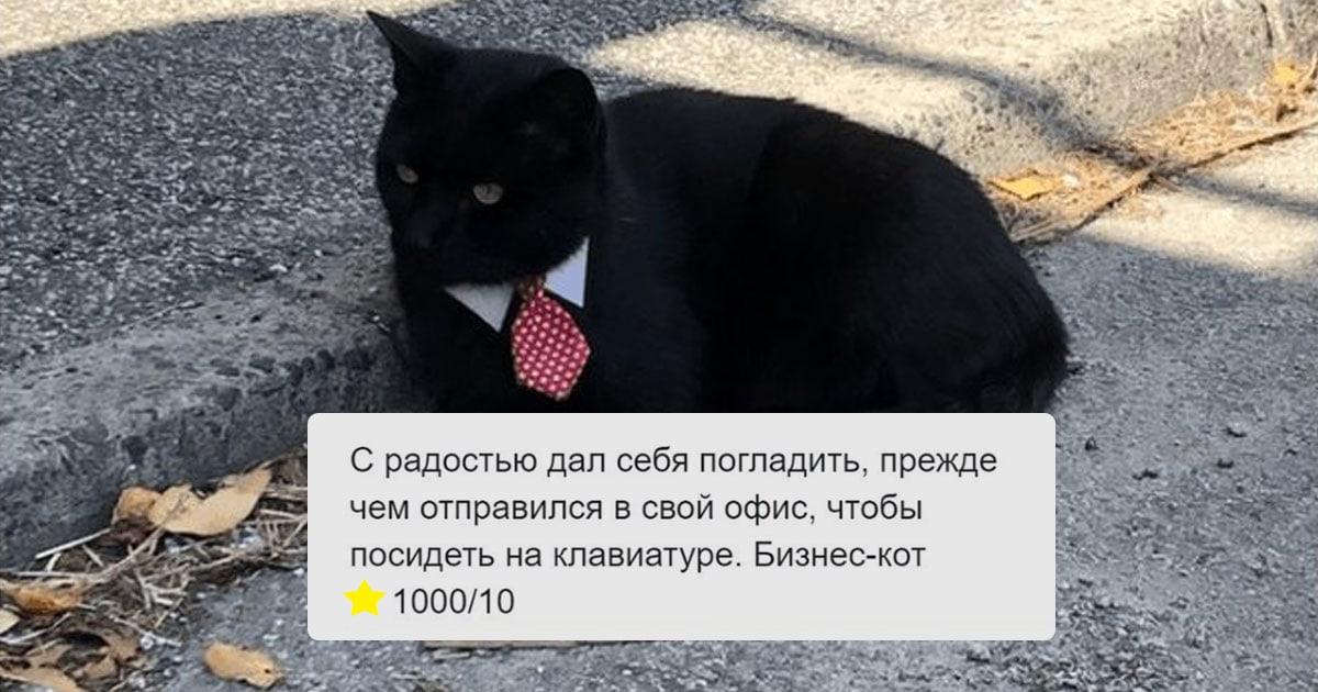 Пользователи Твиттера рецензируют встретившихся им котов и ставят им оценки, сопровождая отзыв крутыми фотками